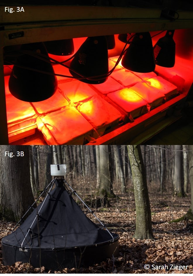 Two photos show methods for extracting soil animals. Photo one shows covered soil samples under heat lamps for heat extraction. Photo two shows a container standing in the forest with photo-electors for extracting newly hatched bipeds.
