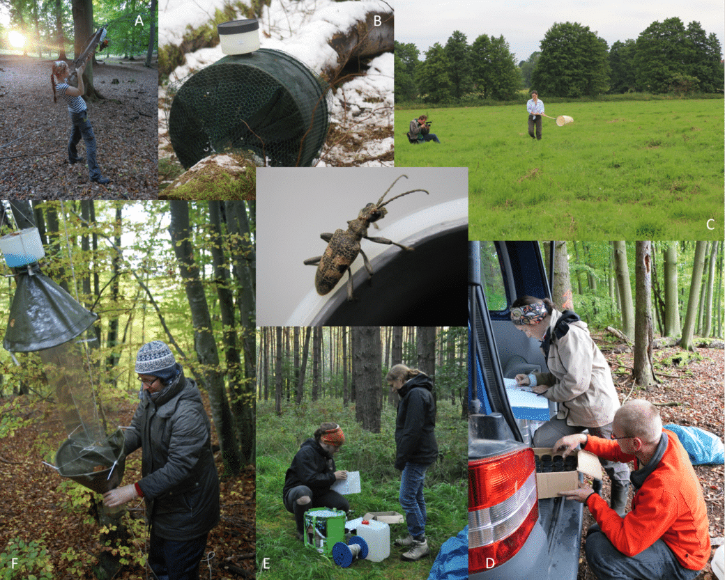 Collage shows photos of project work on insect monitoring. Pictured are the installation of a cross window trap in the canopy, an emergence selector for recording dead wood insects, documentation of landing net trapping in grassland, logging of sampling, preparation for trap emptying in the forest, and emptying a cross window trap