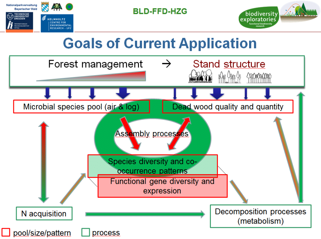 Diagram shows how forest management changes the species pool