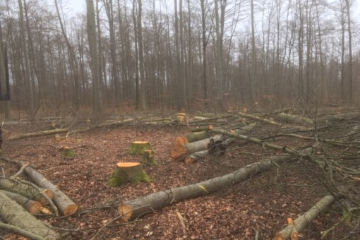 Photo shows a forest area with sawed off trees after a hole cutting has been carried out