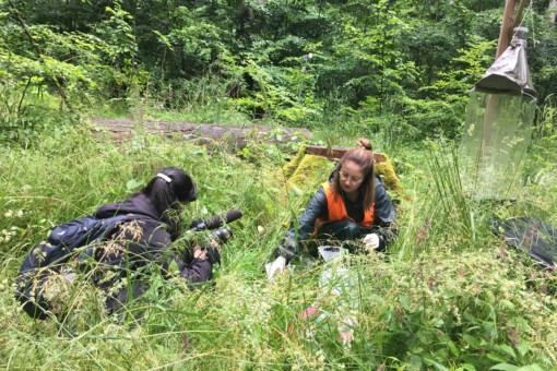 Insect decline: Arte film team shoots about it at the Hainich exploratory