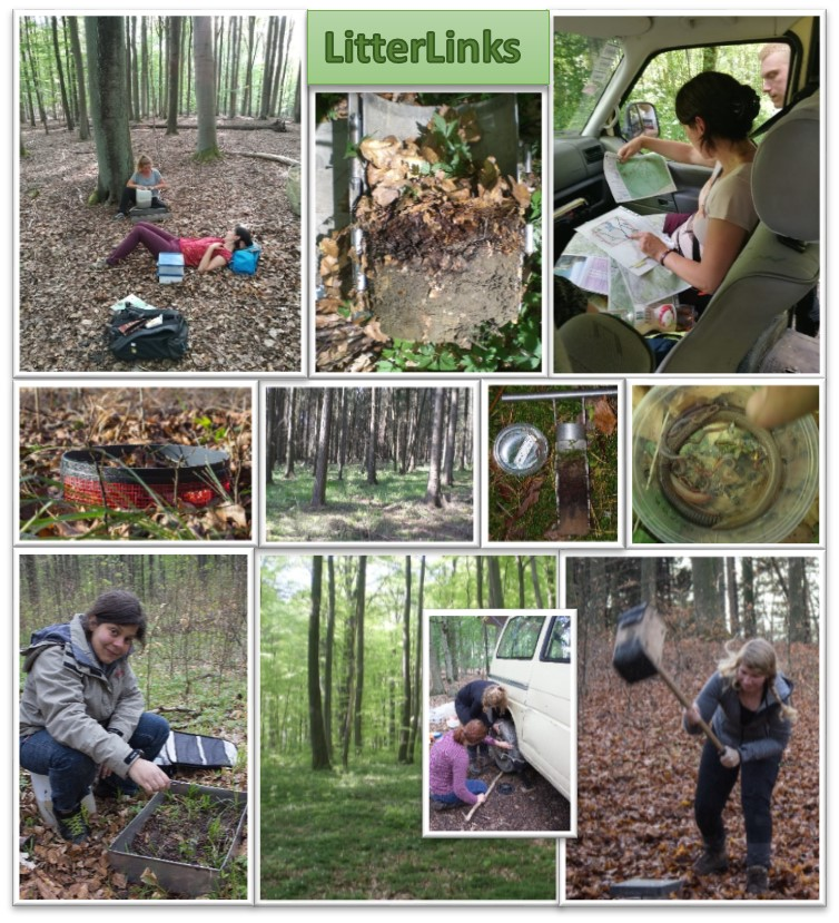 Collage shows photos of project work in the forest