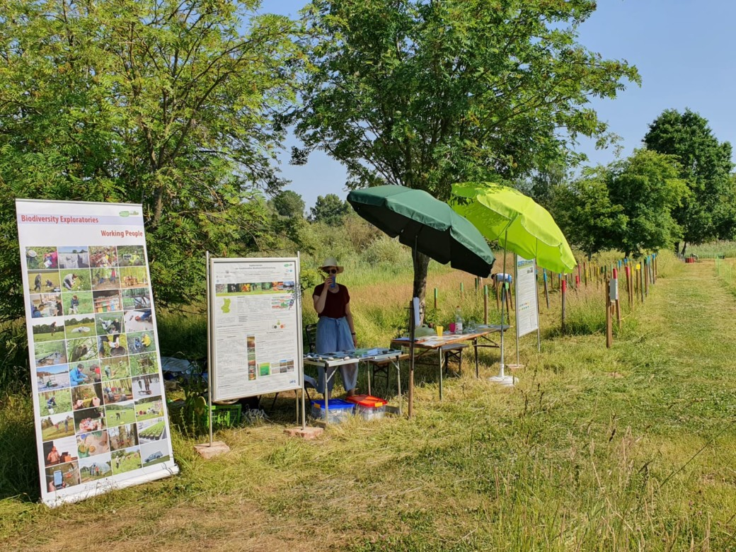 Concert in the midst of nature – Biodiversity Exploratories were there!