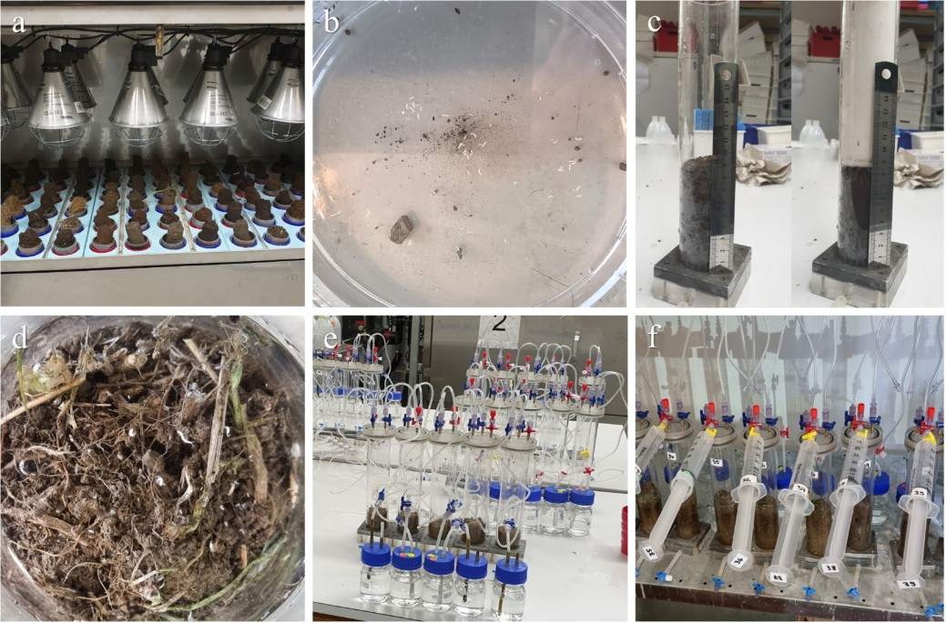 Collage showing photos of the laboratory work of the Resoilience project: soil cores in extractors, dish with extracted mesofauna, defaunated soil cores in microcosms, live extracted soil-dwelling invertebrates, installation of the microcosm experiment and installation for measuring trace gas release