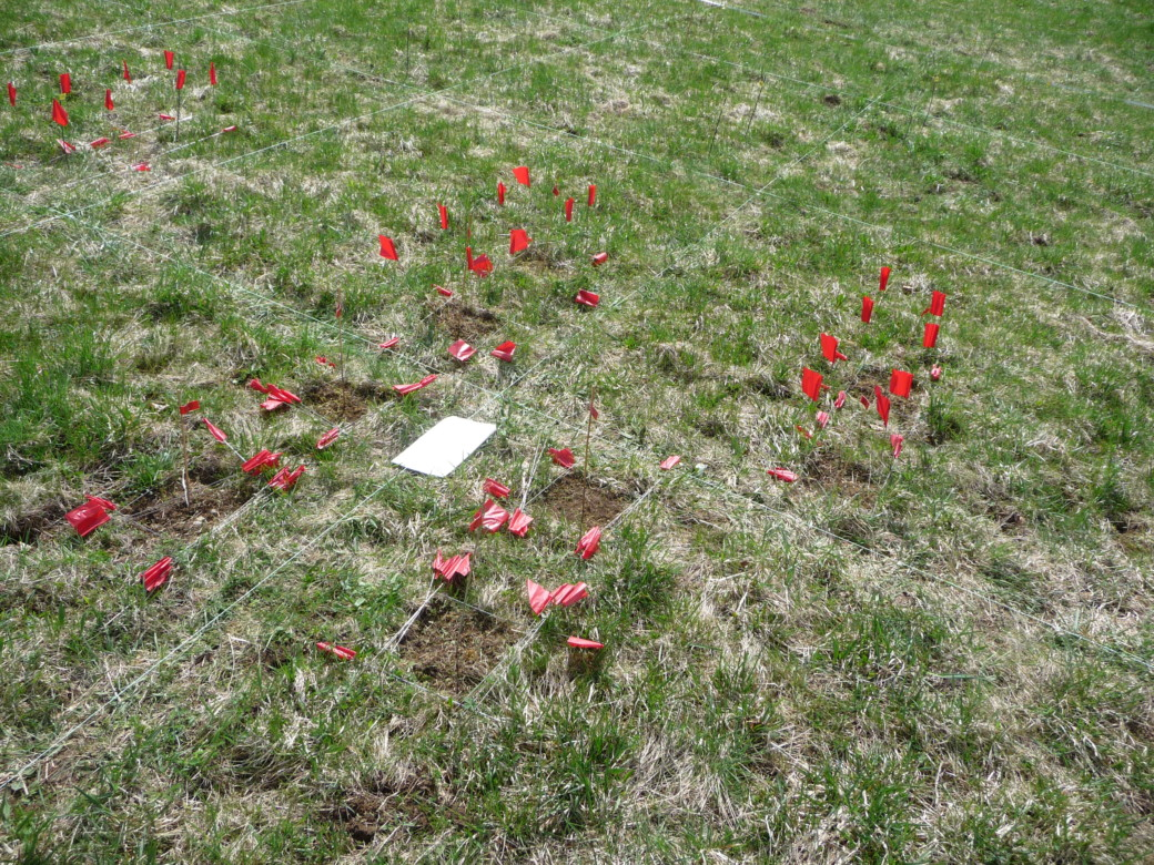 Photo shows soil area with red flag markings for plant uptake and biomass sampling