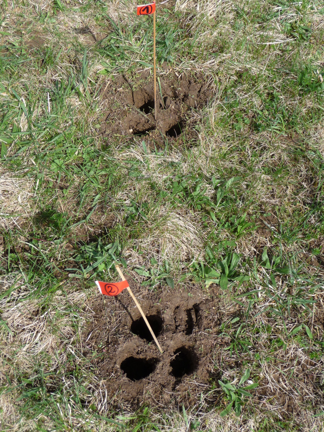 Photo shows site of soil sampling: four cylindrical holes in the soil arranged in a square